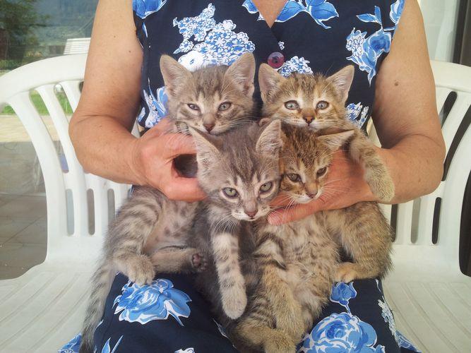 Verschenken junge katzen schweiz zu Bauernhof