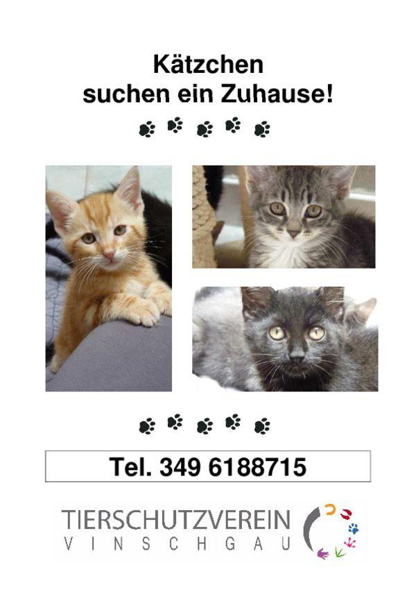 suche katzen zu verschenken